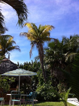 Sea Cove Motel: Garten