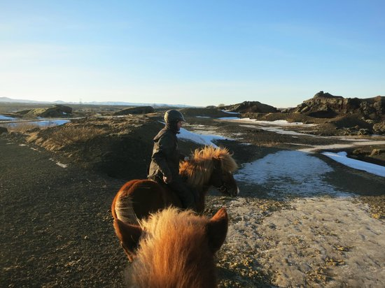 Islenski Hesturinn, The Icelandic Horse - Riding Tours: out for the ride