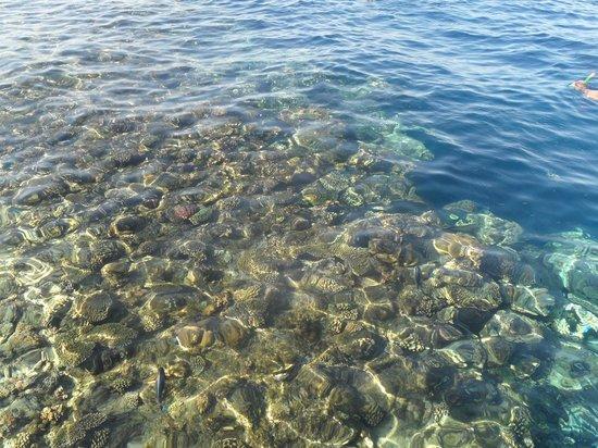 Otium Hotel Amphoras: Barriera corallina