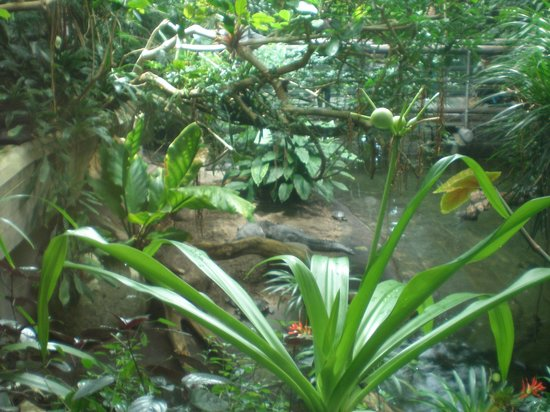 Aquarium: Zona alligatori