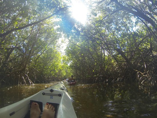 Adventure Sea Kayak: Through the mangroves