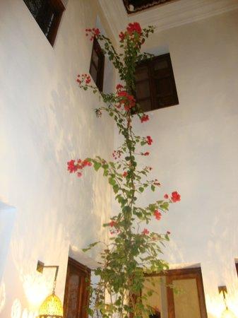 Riad Chayma: Courtyard bougainvillea