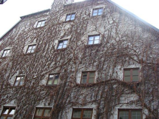 Platzl Hotel: плющ