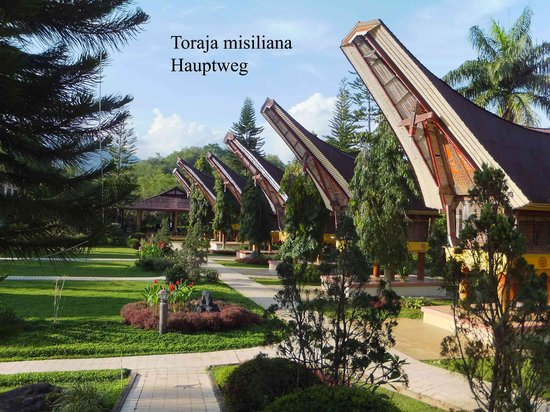 Toraja Misiliana Hotel: Hauptweg