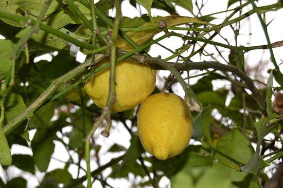 Hotel Los Globos: Árbol frutal en el jardín privado