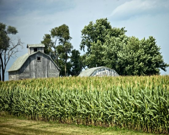Evanston Cellars -  Wine Trail Tours: Barn and corn fields on West Prairie Tour