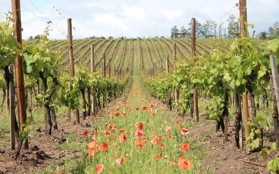 Madre De Agua Hotel Rural: Vinhas - Vineyards