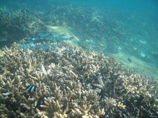 Ticabo Diving Centre: Corail Flic en Flac