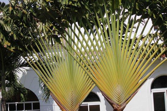 Grand Bahia Principe Jamaica: Cool trees