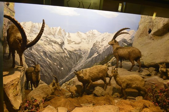 Civico Museo di Storia Naturale : interesting scenes of nature