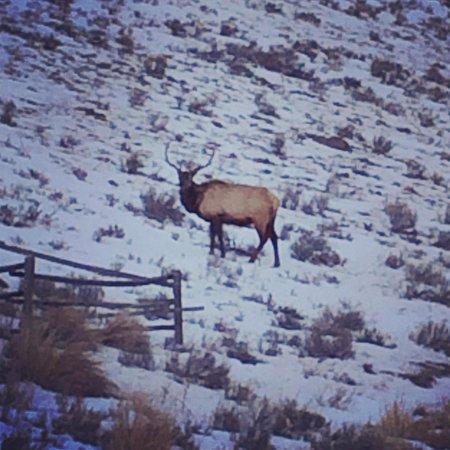 Jackson Hole Wildlife Safaris - Day Tours: Beautiful elk on our tour
