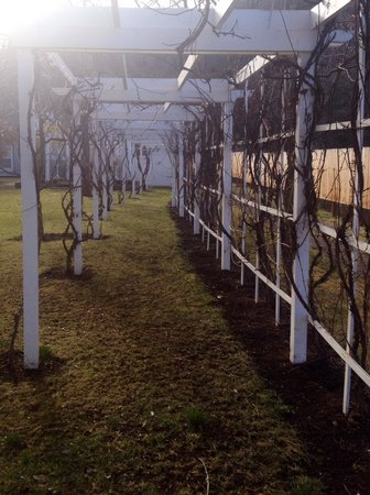 Lithia Springs Resort : Outside trellis - perfect for a spring wedding!