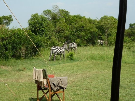 Encounter Mara, Asilia Africa: View from tent