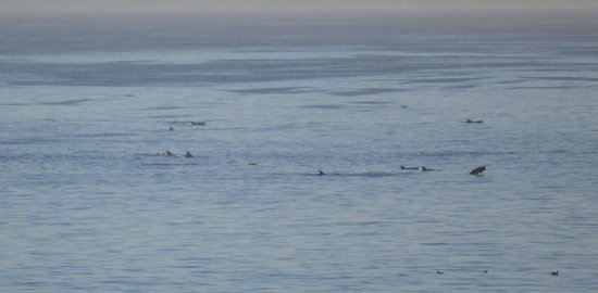 Spindrift Inn: Dolphins in View of Our Room