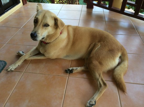 Samui Mountain Village: der liebe Hund Molly