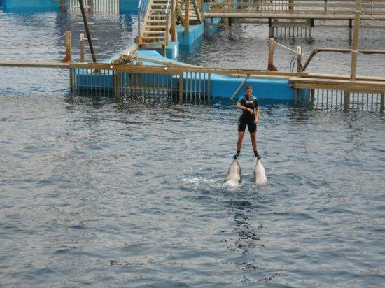 Oceanografic: Выступление дельфинов
