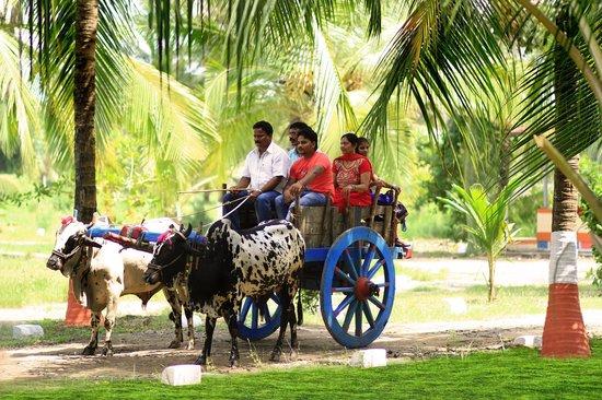 Palghar, India: Bullock cart ride