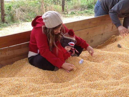 Vala's Pumpkin Patch: Corn Pit