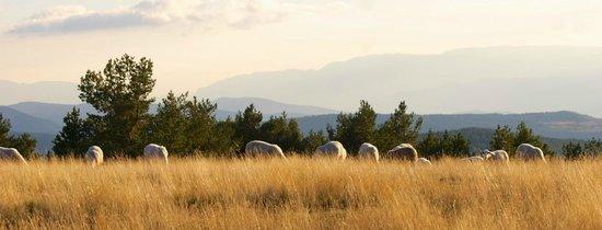 Cal Bosch Turisme Rural: Ramats