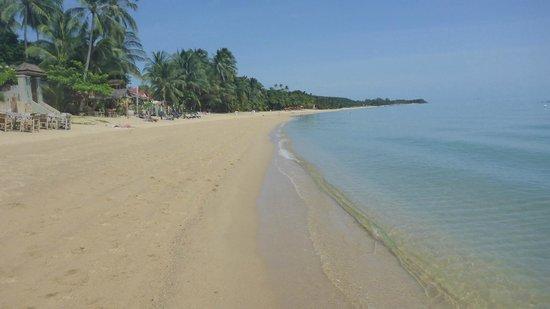 Florist Resort: Beach