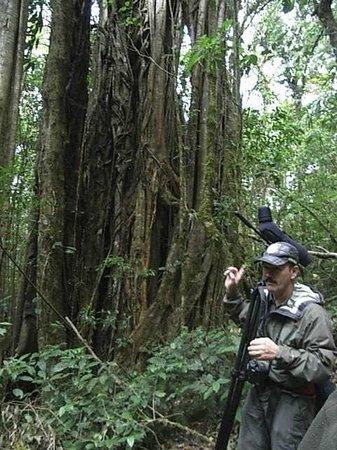 Guides of Monteverde: Adrián Méndez en el bosque nuboso