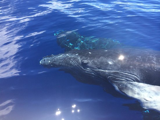 Adventure X Boat Tours: Baby whale swam right up to the boat