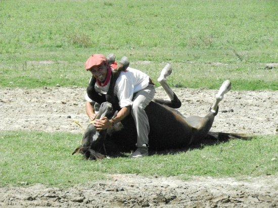 Touristic Argentinian Ranch Don Silvano: Gaucho love their horses