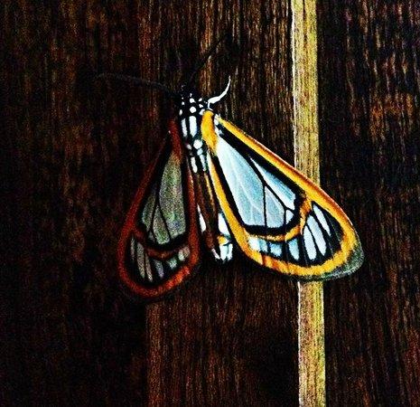 La Kukula Lodge: Schmetterling an unserer Türe