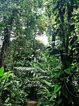 La Kukula Lodge: Garten