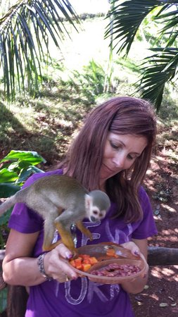 Zip Line at Monkey Jungle: What amazing little creatures. .