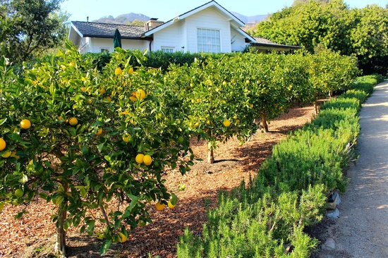 San Ysidro Ranch, a Ty Warner Property : Citrus Orchard