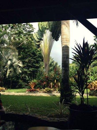 Hotel Banana Azul: The lovely landscaping.