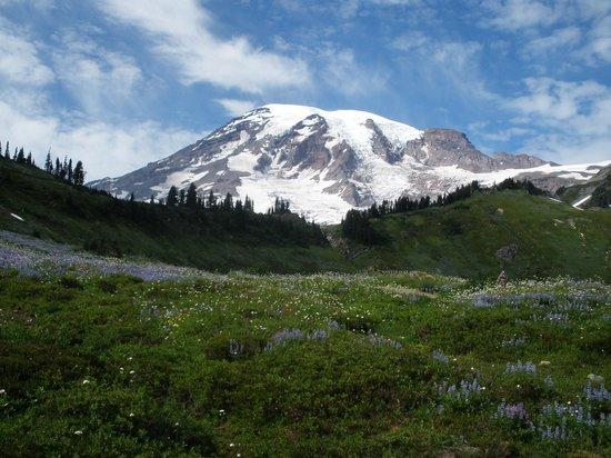 Skyline Trail : mountain bloom