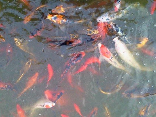 Berlin Resort : fish