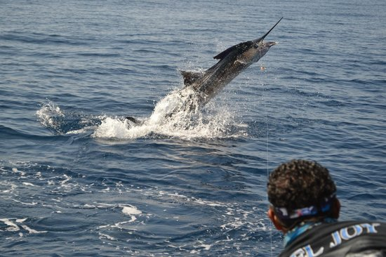 Reel Intense Adventures - La Vida Sportfishing: Sailfish
