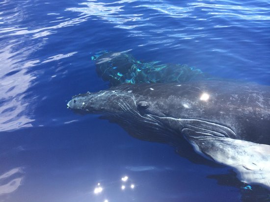 Adventure X Boat Tours: baby and mama right near the boat