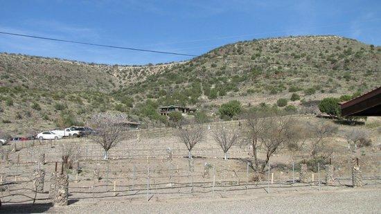 Verde Valley Wine Trail: Cottonwood