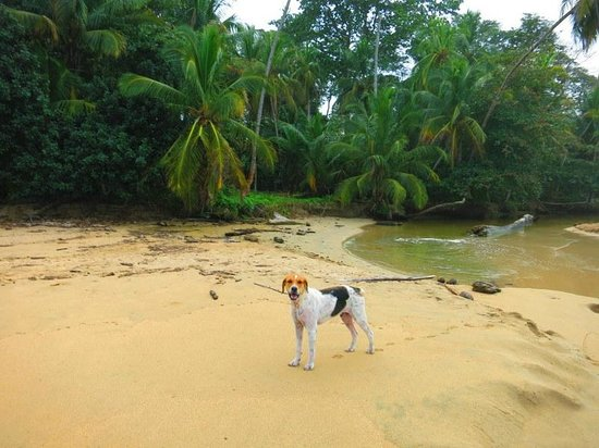 Caribe Horse Riding Club : Our canine companion for part of the ride