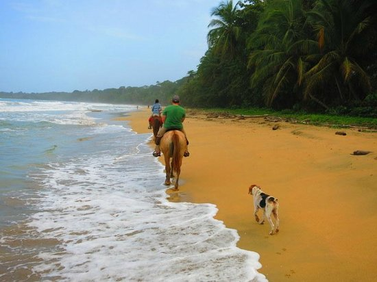 Caribe Horse Riding Club: Horseback riding on the beach