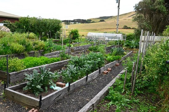 Johanna Seaside Cottages: Vege Garden
