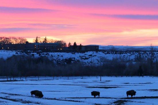 Bear River State Park: Bison Sunset