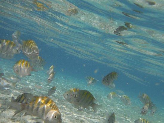 Sunscape Curacao Resort Spa & Casino - Curacao: Fish