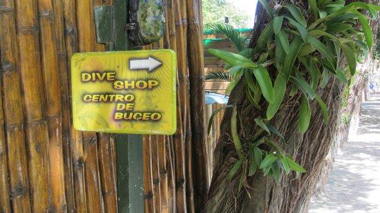 Bananarama Dive Center: the way
