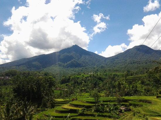 Artha Bali Tours