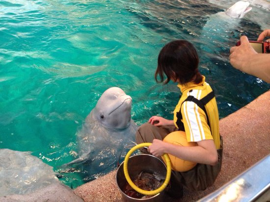 Port of Nagoya Public Aquarium: ????(?????)??? ...