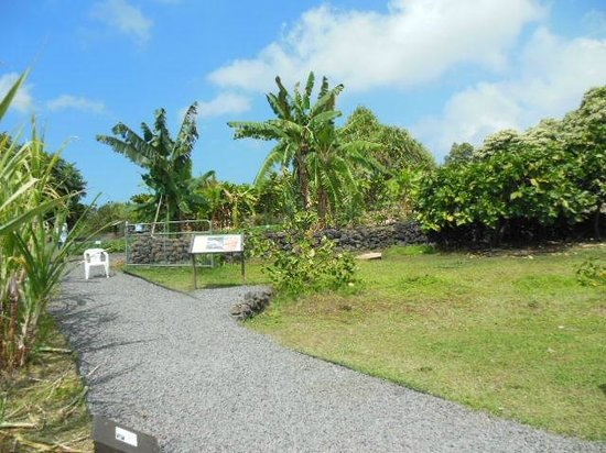 "Amy B.H. Greenwell Ethnobotanical Garden : The ""nursery"" of old plants and flora of Hawaii Ne"