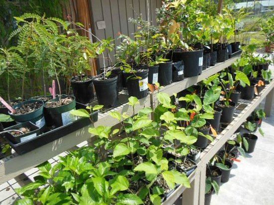 Amy B.H. Greenwell Ethnobotanical Garden: Buyers rack for local plants
