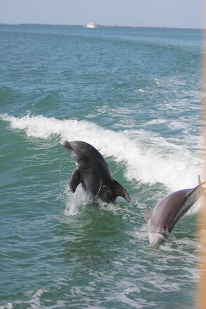 Captiva Cruises: dolphins having fun in the waves from the boat