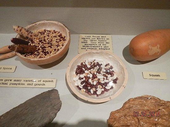 Tennessee River Museum : Indian Diet items