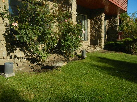 Calafate Parque Hotel: Jardines con visita deVandurrias